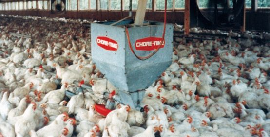 chicken house jpg